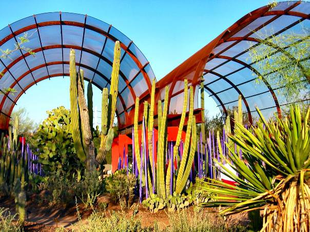 things to do in phoenix az Dessert Botanical Garden