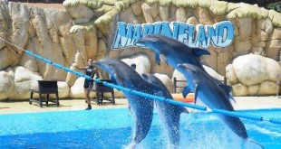 things to do in st. augustine fl marineland