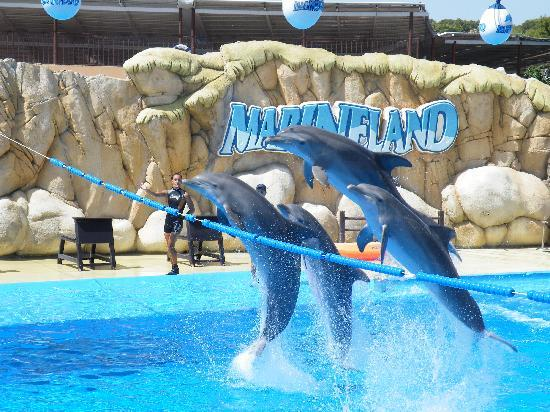 things to do in st augustine fl marineland