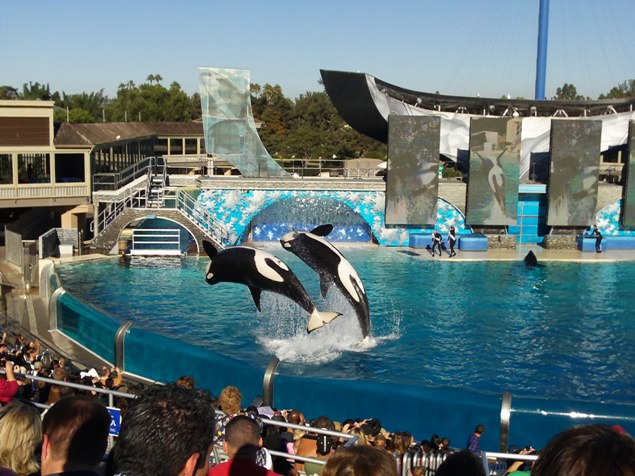 Things to do in San Diego Sea World