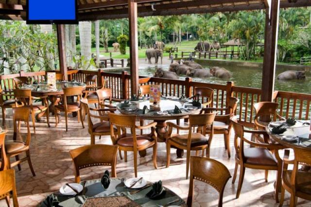 Things to do in Bali Elephant Safari Park Lodge