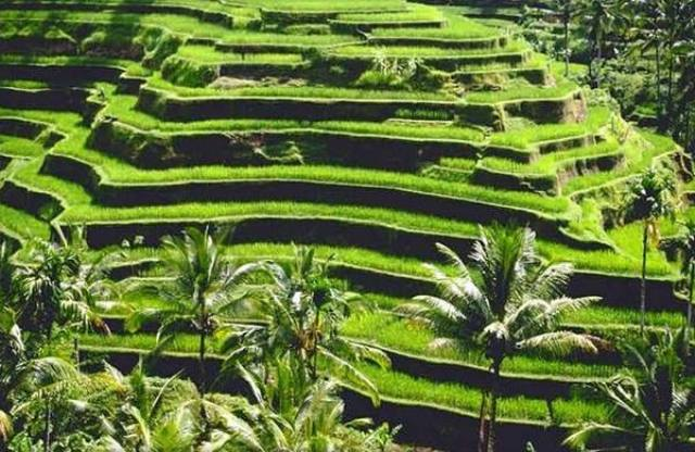 Things to do in Bali Tegalalang Rice Terraces Bali
