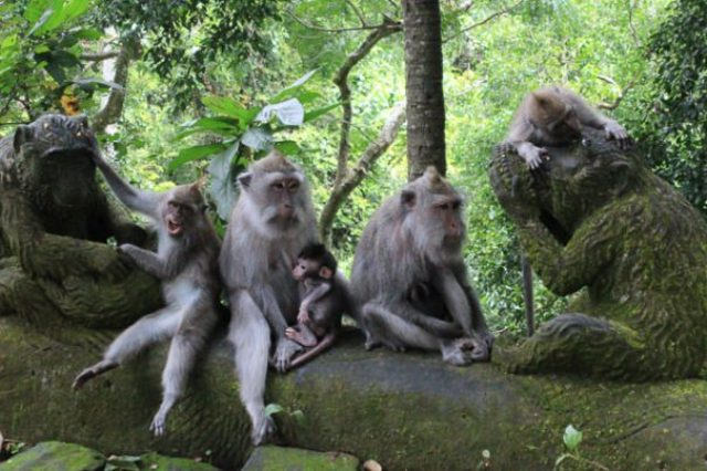 Things to do in Bali Ubud Monkey Forest