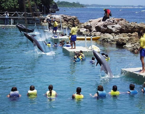 Things to do in Jamaica Dophin cove