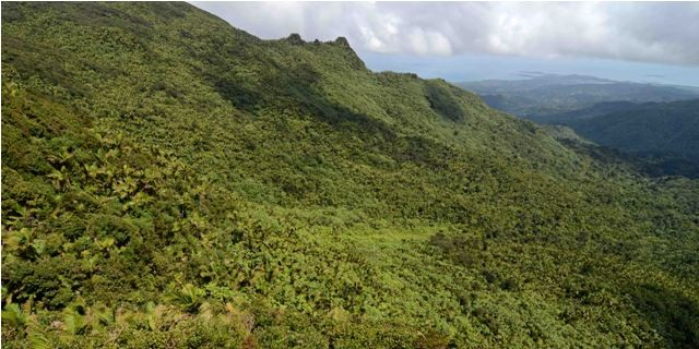 Things to do in Puerto Rico El Yunque National Forest