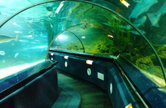 Things to do in Auckland Kelly Tarlton Aquarium