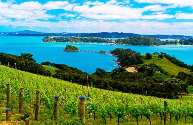 Things to do in Auckland waiheke island