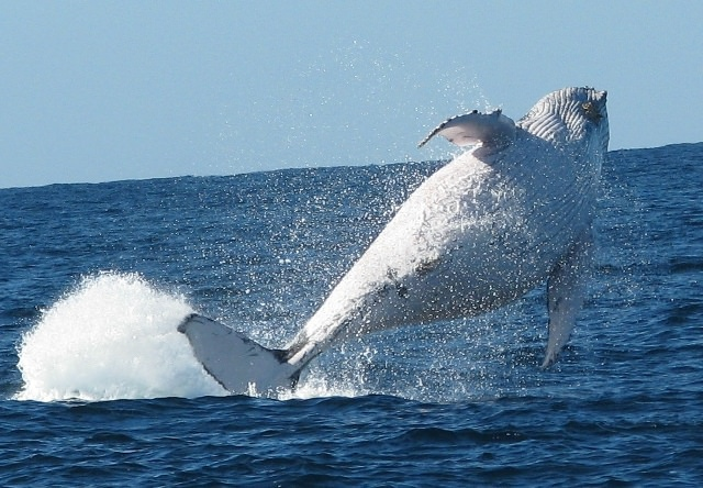 Things to do in Brisbane Whale Watching