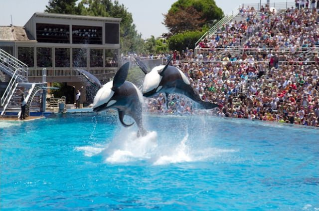 Things to do in California SeaWorld