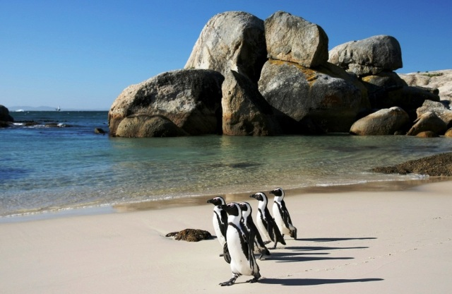 Things to do in Cape Town boulder beach