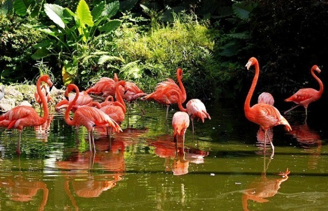 Things to do in Fort Lauderdale flamingo gardens