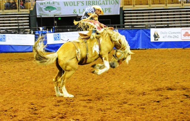 Things to do in Kissimmee silver spurs rodeo