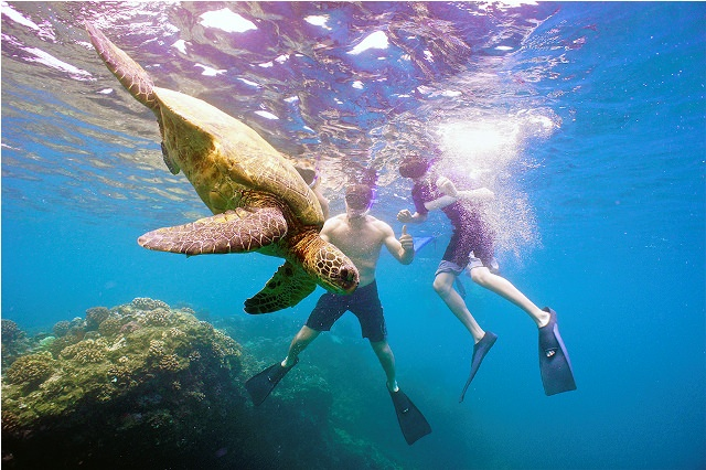 Things to do in Maui Snorkeling