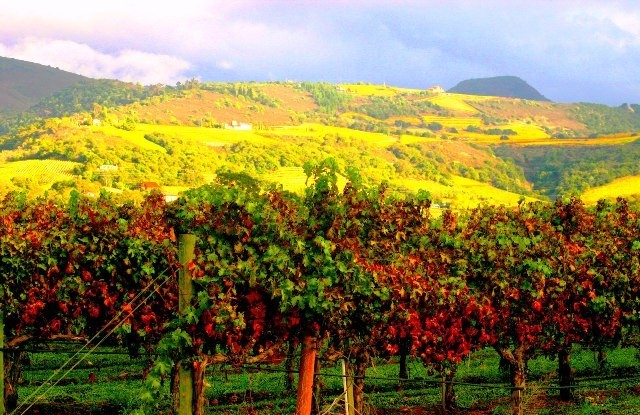 Things to do in Northern California Napa Valley
