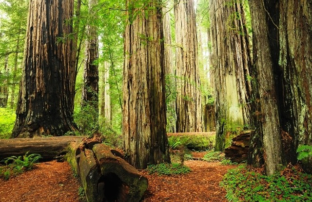 Things to do in Northern California redwood national park