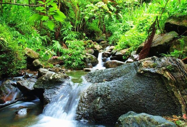 Things to do in San Juan El Yunque National Forest