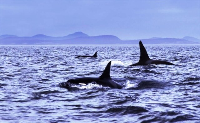 Things to do in Scotland whales