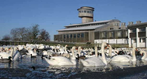things to do cotswolds wwt slimbridge wetland center