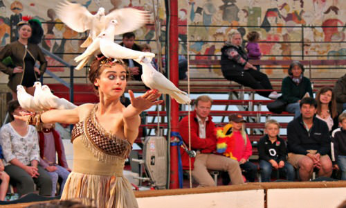 things to do in cotswold giffords circus